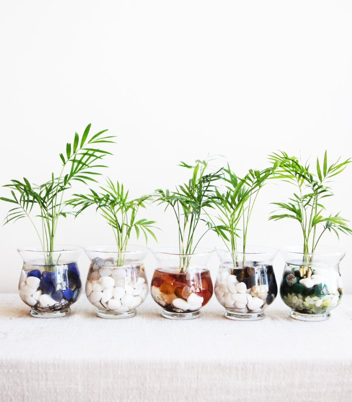 Water Culture Table Palm